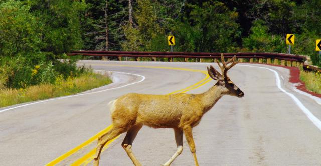 Comment éviter les accidents avec la faune en cette saison