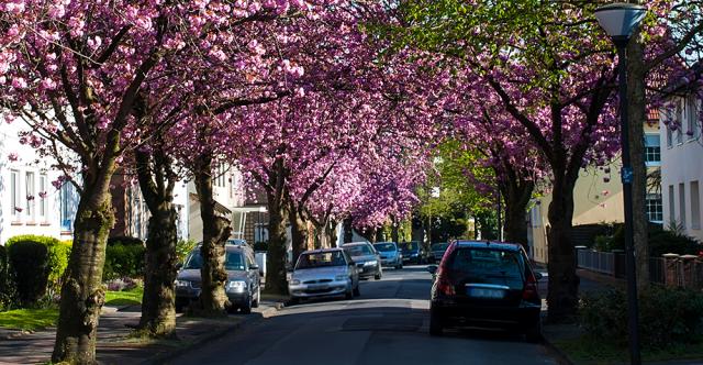 Ne laissez pas le pollen et la sève gâcher le lustre de votre voiture